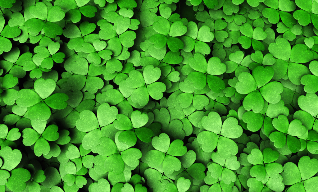 top view of a expanse of four-leaf clovers of different height and dimensions