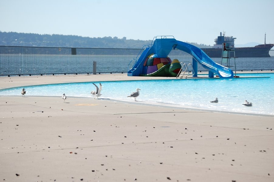 Seagulls by Second Beach Pool