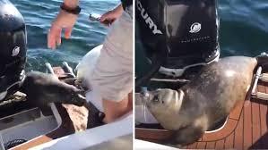 seal escaping orca