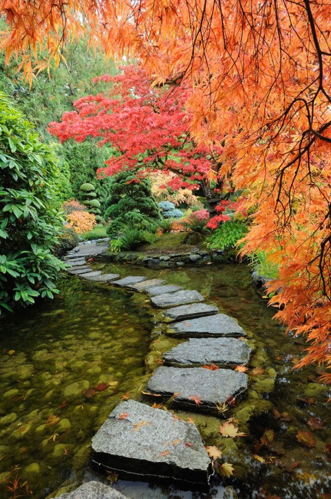 Japanese Maples at Butchart Gardens